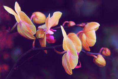 Photograph - Orchid Grace by Jessica Jenney
