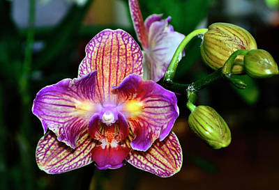 Photograph - Orchid - High Energy 001 by George Bostian