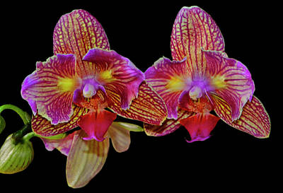 Photograph - Orchid - High Energy 002 by George Bostian