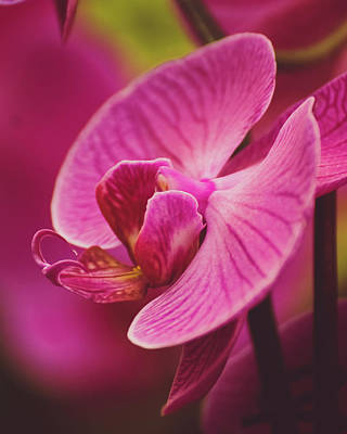 Photograph - Orchid II by Krystle DiNicola