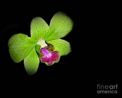 Photograph - Orchid In Green by Judi Bagwell