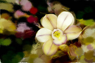 Photograph - Orchid In The Dark by Ches Black