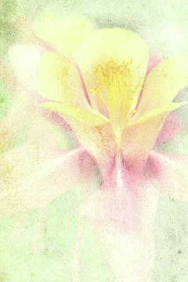 Photograph - Orchid In The Fog by Lali Kacharava