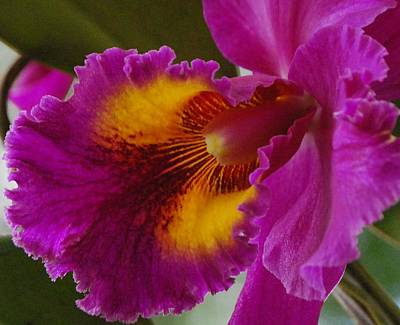 Art Print featuring the photograph Orchid In The Wild by Debbie Karnes