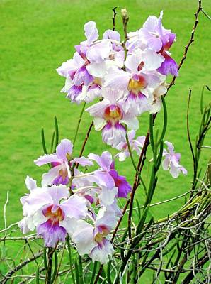 Old Masters Royalty Free Images - Wild Orchid Near the Gnarled Tree Royalty-Free Image by Phyllis Kaltenbach