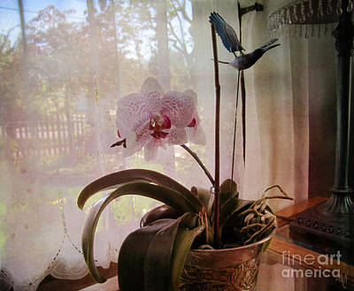Photograph - Orchid In The Window by Victoria Harrington