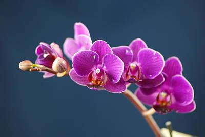 Orchid Art Print by Jeff Swan