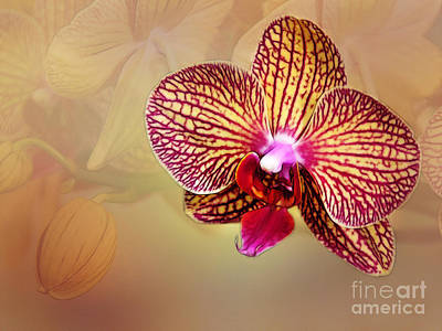 Photograph - Orchid by Judi Bagwell