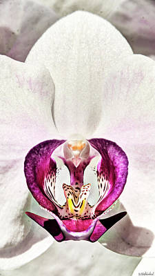 Photograph - Orchid King On Its Throne by Weston Westmoreland