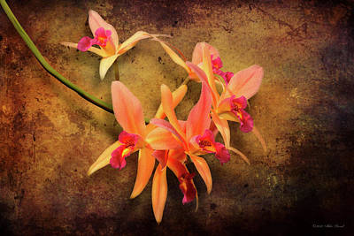 Photograph - Orchid - Laelia - It's Showtime by Mike Savad