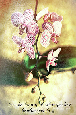 The Followers Photograph - Orchid Love by Chellie Bock
