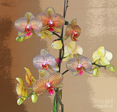 Photograph - Orchid Love by Jeanette French