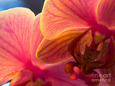 Photograph - Orchid Macro by Lutz Baar