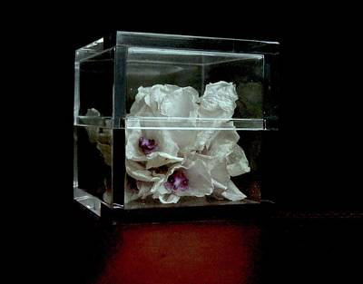 Photograph - Orchid Memories by Margie Avellino