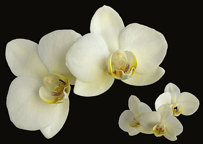 Orchid Montage Art Print by Hazy Apple