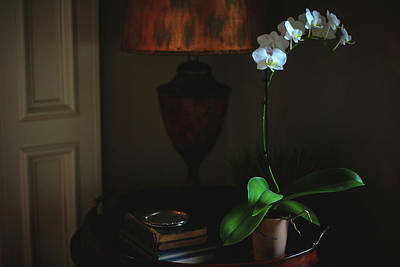 Orchid Morning Art Print by Paul Green
