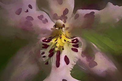 Photograph - Orchid Mysterious by Richard Goldman