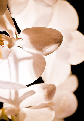 Orchid Art Print by Nora Batternay