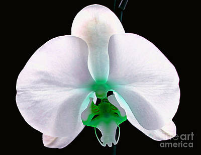 White Orchid Photograph - Orchid Of Mystery by Krissy Katsimbras