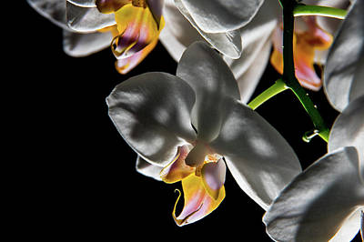 Orchid On Fire Art Print