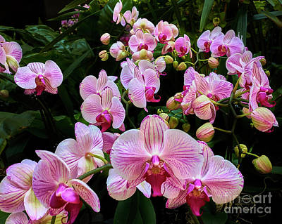 Photograph - Orchid Parade by Steve Ondrus