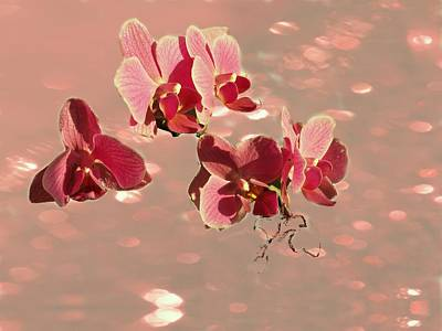 Orchid Petals In Pink Art Print by Irma BACKELANT GALLERIES