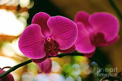 Photograph - Orchid Pink With Bokeh by Carol Groenen