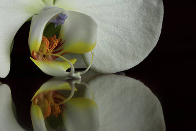 Photograph - Orchid Reflected by Bob Cournoyer