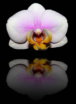 Photograph - Orchid Reflection by Judy Vincent