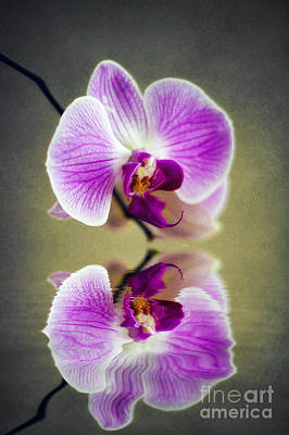 Photograph - Orchid Reflections by Ian Mitchell