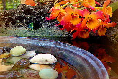 Garden Photograph - Orchid Reflections by Lori Seaman