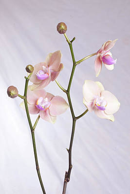 Photograph - Orchid by Robert Camp