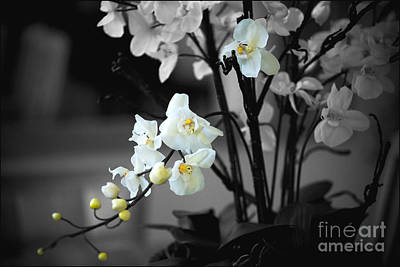 Photograph - Orchid Selective Color by Rich Collins
