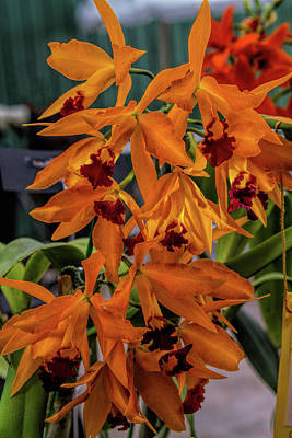 Photograph - Orchid Show 12 by Alana Thrower