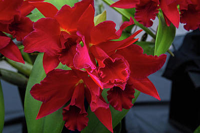 Photograph - Orchid Show 13 by Alana Thrower