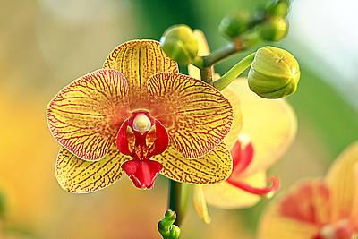 Orchid Show Art Print