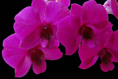 Photograph - Orchid Song by Aimee L Maher ALM GALLERY