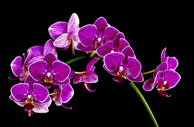 Orchid Splendor Art Print by Robert  McCord