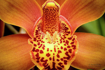 Photograph - Orchid Splendor by Ronald Hoehn