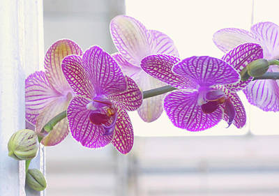 Orchid Spray Art Print