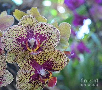 Wall Art - Photograph - Orchid Spray by Josie Elias