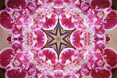 Digital Art - Orchid Star by Shawna Rowe