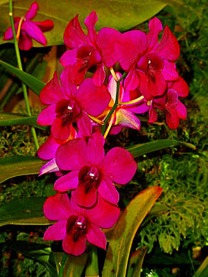 Photograph - Orchid Study 21 by Robert Meyers-Lussier