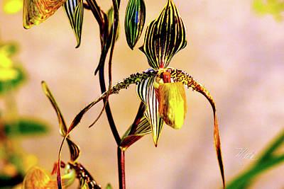 Photograph - Orchid Study Eight by Meta Gatschenberger