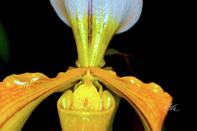 Photograph - Orchid Study Five by Meta Gatschenberger