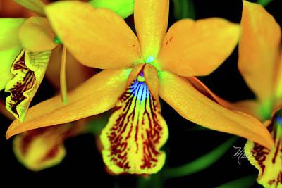 Photograph - Orchid Study Sixteen by Meta Gatschenberger