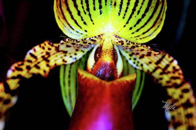 Photograph - Orchid Study Thirteen by Meta Gatschenberger