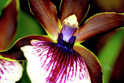 Photograph - Orchid Study Two by Meta Gatschenberger