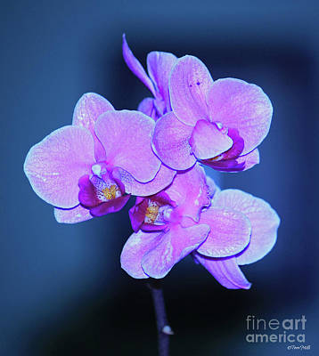 Photograph - Orchid by Terri Mills