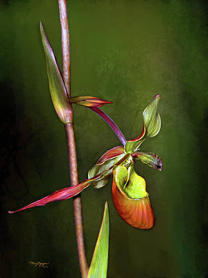 Digital Art - Orchid  by Thanh Thuy Nguyen